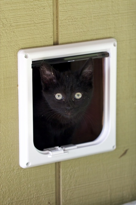 Cat door for interior garage door can be full opened or even locked when you leave home