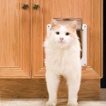 : Interior cat door with flap is the most convenient construction worked out for home pets