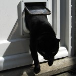 Interior door with cat flap built in lets your pet coming in and out closing the door behind it