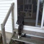 : Interior screen door for cats will protect your door from your pet's claws